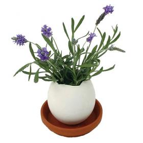 Eggling - Lavender