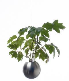 Hanging Garden (8 cm)