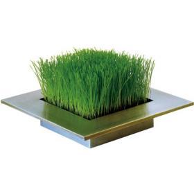 Carré de pelouse