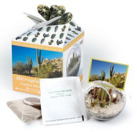 Cactus sous verre