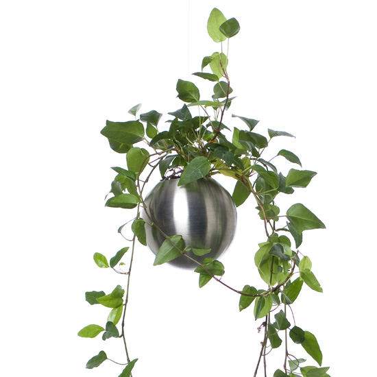 Decoration Cuisine Plante Sphere