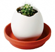 Oeuf magique Eggling - Cactus