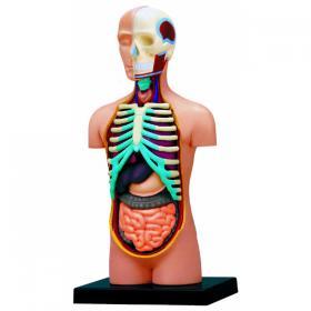 Maquette de corps humain