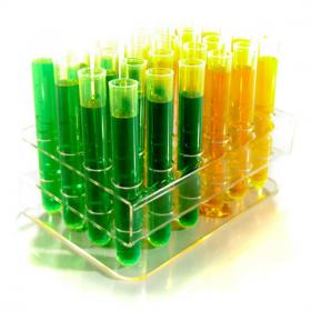 24 Test tube shots