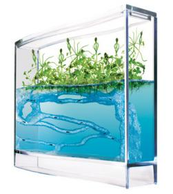 Antquarium Forest - Ant farm
