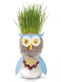 Owl Grasshead