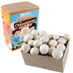 Mushroom Grow Mini-kit for Kids