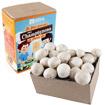 Mushroom Grow Mini-kit for Kids