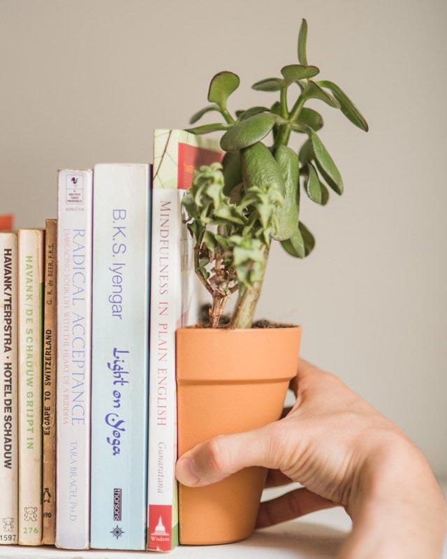 pots serre livre design le dindon. Black Bedroom Furniture Sets. Home Design Ideas