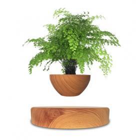 Plante en lévitation